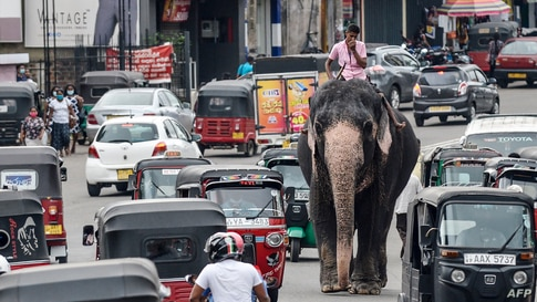 A mahout rides an elephant in the traffic down a street in Piliyandala, a suburb of Sri Lanka's capital Colombo.