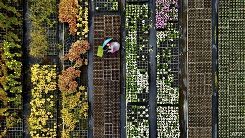 This aerial view shows a farmer sorting potted plants in the Daxi district of the northern city of Taoyuan, Taiwan.