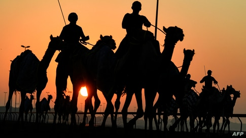 Handlers herd racing camels equipped with robot jockeys during a race at Dubai's al-Marmoom heritage village, in the United Arab Emirates.