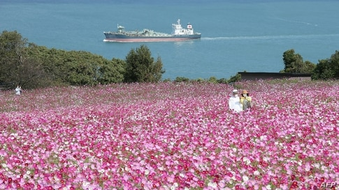 A couple takes a selfie at Nokonoshima Island Park on Nokonoshima Island, in Hakata Bay, Fukuoka prefecture, Japan.