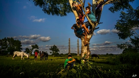 Boys spend the afternoon on top of a tree, watching their grazing horses at sunset in Wajay, Havana, Cuba, Oct. 13, 2020.