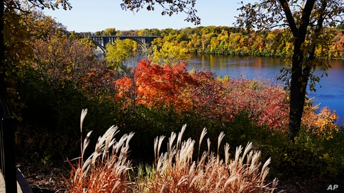 The leaves on the trees and brush change colors along the River Gorge Overlook on the St. Paul, Minnesota side of the Mississippi River.