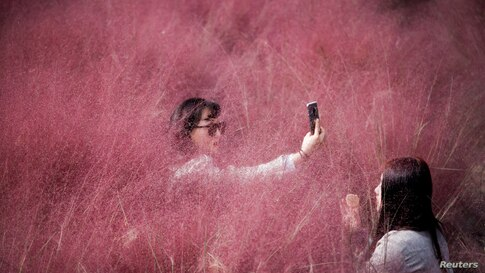 A woman takes a selfie in a pink muhly grass field in Hanam, South Korea.