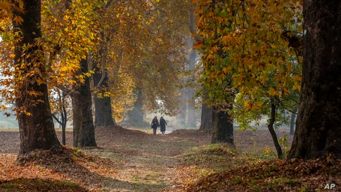 Women walk in a garden covered with fallen Chinar leaves on the outskirts of Srinagar, Indian-controlled Kashmir.