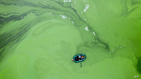 A fisherman in a rubber boat is surrounded by rotting cyanobacteria in the Kyiv Water Reservoir near Kyiv, Ukraine.