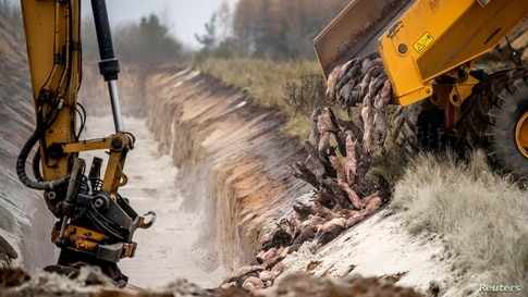 Members of Danish health authorities depose dead mink in a military area near Holstebro in Denmark, Nov. 9, 2020.