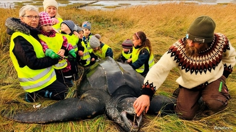 Children gather around a giant leatherback turtle that was found on a seashore in southern Jutland, Denmark, Nov. 3, 2020.