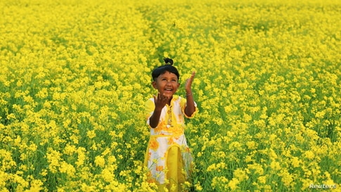 A girl plays in a mustard field in Munshiganj, Bangladesh January 8, 2021. REUTERS/Mohammad Ponir Hossain     TPX IMAGES OF THE…