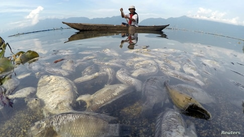 A fisherman paddles a wooden boat as dead fish are seen at Maninjau lake in Agam regency, West Sumatra province, February 5,…