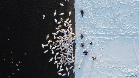 People feed swans on the bank of a water reservoir of the Khmelnytskyi Nuclear Power Plant (KhNPP) near the town of Ostroh, Ukraine.