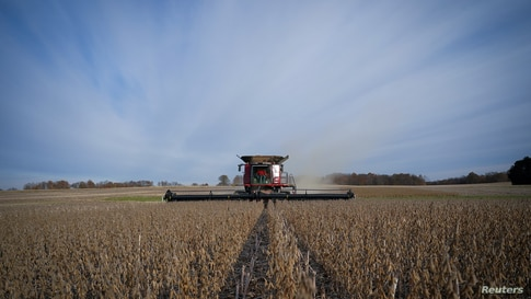 FILE PHOTO: Soybeans are harvested from a field on Hodgen Farm in Roachdale, Indiana, U.S. November 8, 2019. Picture taken…