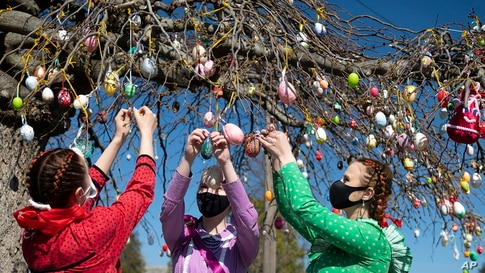 Dressed in folk costumes, young women decorate a tree with painted Easter eggs in Dombrad, Hungary.