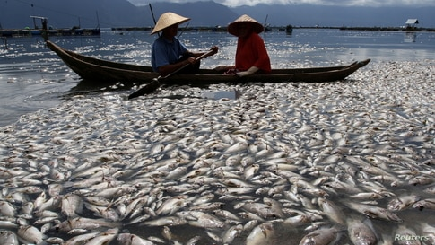 Fishermen are seen near thousands of fish found dead at Lake Maninjau due to lack of oxygen levels at the bottom of the lake and bad weather that hit the area in Agam, West Sumatra Province, Indonesia.
