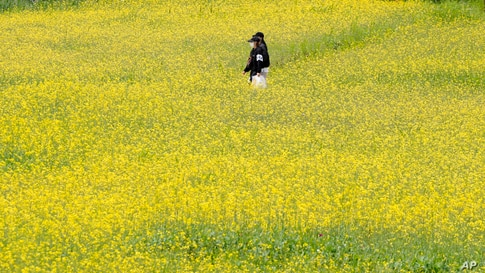 Visitors walk through a field of flowers at a park in Paju, South Korea.