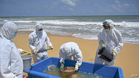 Members of the Sri Lankan Navy work to remove debris washed ashore from the Singapore-registered container ship MV X-Press…