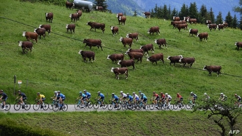 The pack rides during the eighth stage of the 73rd edition of the Criterium du Dauphine cycling race, a 147km between La Lechere-Les-Bains and Les Gets, France.