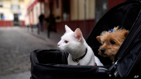 A cat and a dog sit inside a baby stroller in Seville, Spain, June 19, 2021.