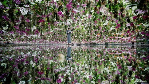 """A teamLab staff member works inside the """"Floating Flower Garden"""", which consists of a three-dimensional mass of flowers, at teamLab Planets in Tokyo, Japan."""