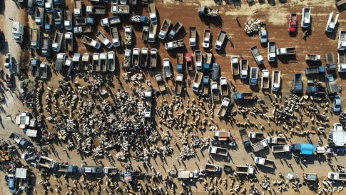 An aerial view shows Syrians gathering at a livestock market to sell and buy sacrificial animals on the outskirts of Maaret…