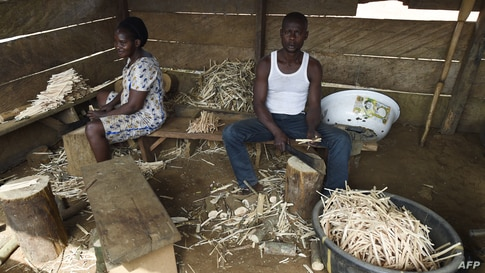 Cameroonian refugees make chewing sticks for cleaning teeth to earn a living at a temporary home in Agborkim town, Etung district of Cross Rivers State, southeast Nigeria, Feb. 2, 2018.