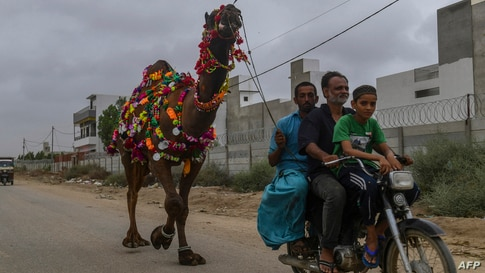 People bring a sacrificial camel home from a cattle market ahead of the Muslim festival of Eid al-Adha in Karachi, Pakistan.