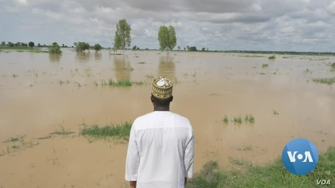 Nigeria Loses a Quarter of Rice Production to Floods