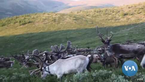 Mongolian Youth Seek to Preserve Reindeer-Based Tradition