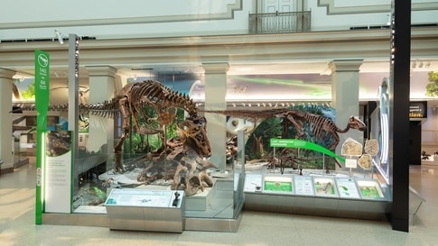 Smithsonian Fossil Exhibit Wows Visitors