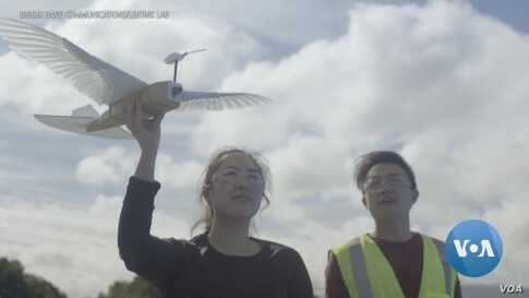 The First Robot to Fly Like A Bird Borrows from Scourge of City Dwellers