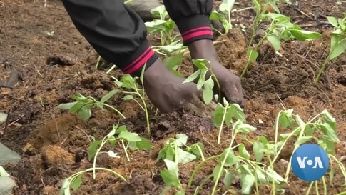 Cameroonian Startup Creates Soil Analysis Kit for Farming Efficiency