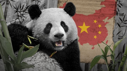 Before COVID Vaccines, China Used Pandas to Aid Diplomatic Efforts