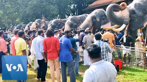 India Temple Tuskers Begin Their Monthlong Wellness Camp