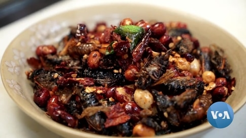 Tree to Table: Cicadas Make for Culinary Adventure at DC Restaurant