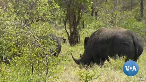 South Africa-Mozambique Cooperation Reduces Rhino Poaching