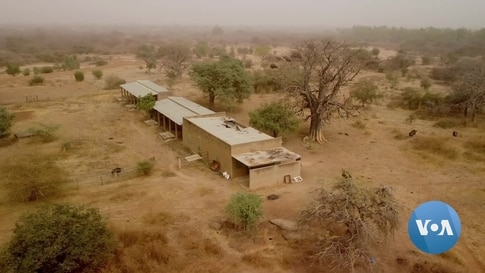 Animals Rescued From Former Burkina Faso President's Private Zoo