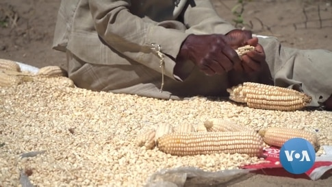 Zimbabwe's Food Insecurity Escalates During COVID-19 Lockdowns