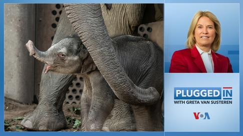 Plugged In with Greta Van Susteren-Protecting the Elephants
