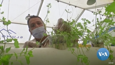 Syrian Refugees Learn Urban Farming