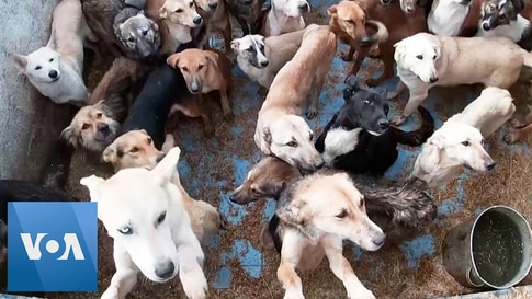 Syrian Animal Lover Rescues More Than 3,000 Dogs
