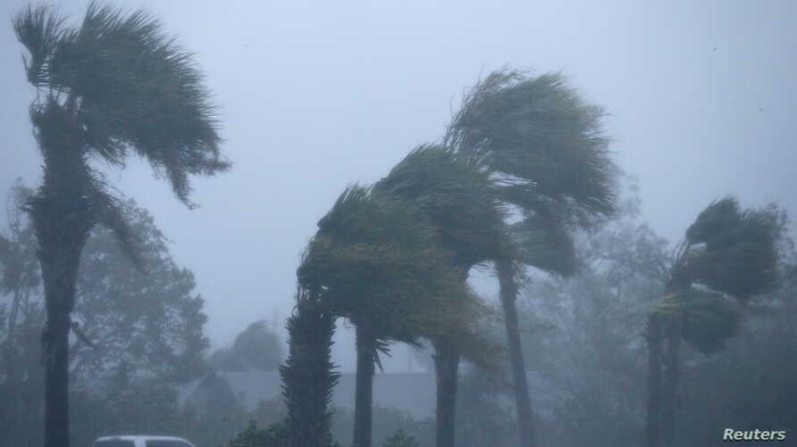 Palm trees bend during Hurricane Michael in Panama City Beach, Fla., Oct. 10, 2018.