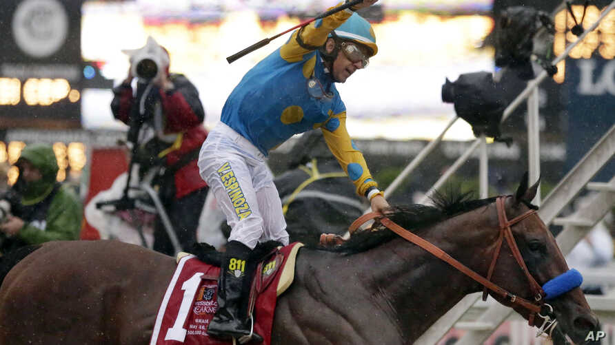 Jockey Victor Espinoza, celebrates aboard American Pharoah after winning the 140th Preakness Stakes at Pimlico Race Course in Baltimore, May 16, 2015.