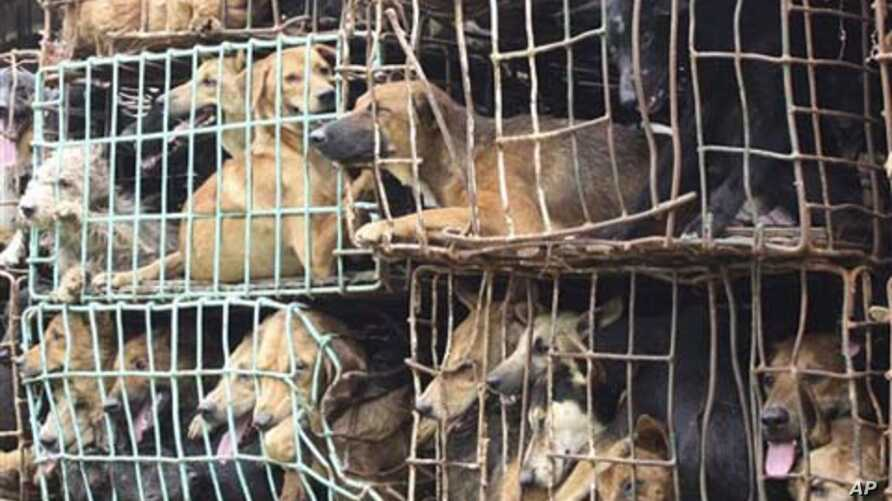 Thai officials seized dogs being transported in northeastern Nakhon Phanom province, Sept. 6, 2011.