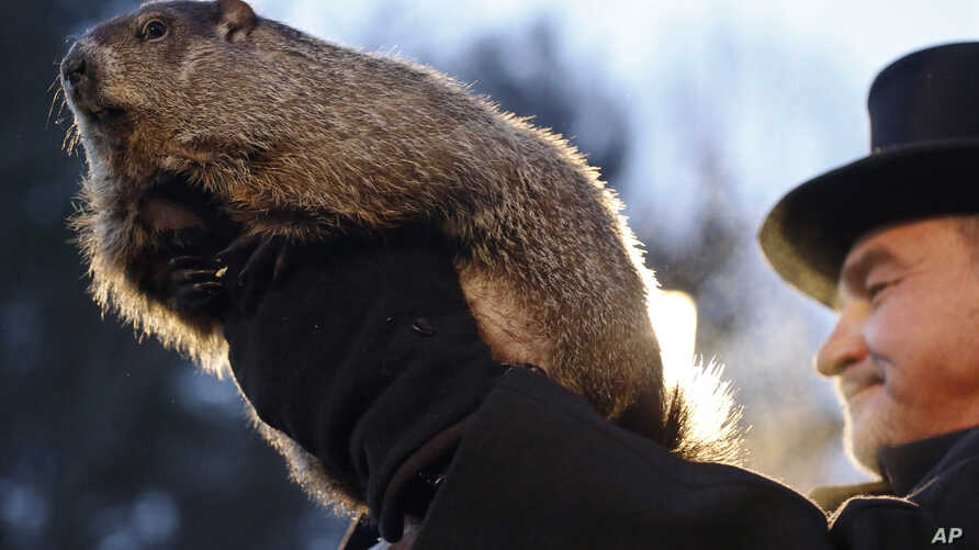 "Groundhog Club co-handler John Griffiths holds Punxsutawney Phil during the annual celebration of Groundhog Day on Gobbler's Knob in Punxsutawney, Pa., Feb. 2, 2016. The handlers say the furry rodent has failed to see his shadow, meaning he's ""predic"