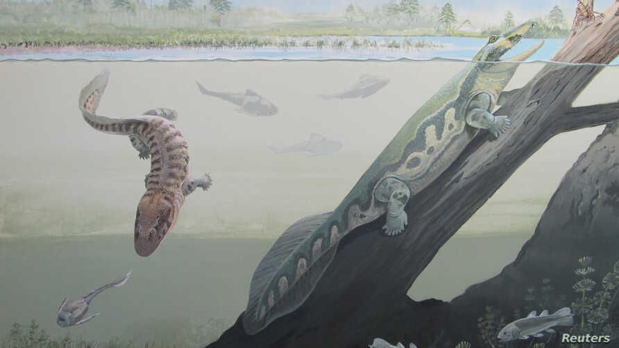 Two newly discovered early amphibians Tutusius and Umzantsia that lived about 360 million years ago during the Devonian Period whose partial remains were unearthed at the Waterloo Farm site in South Africa are shown in this artist's illustration, rel