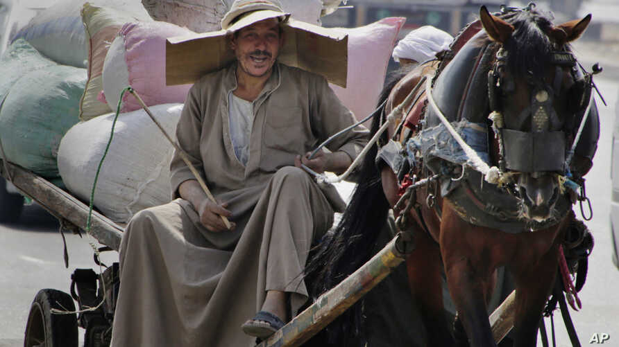 An Egyptian farmer rides his horse cart as he uses a makeshift hat with cardboard to protect his head from direct sunlight on a Cairo street in Egypt, Aug. 11, 2015.