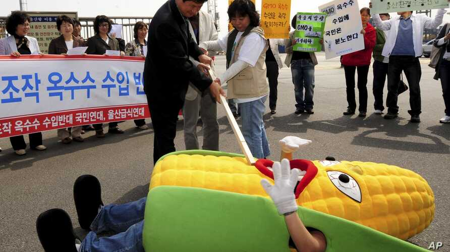South Korean civic group members perform during rally against imported genetically modified organism (GMO) corn from China, Ulsan, South Korea, May 1, 2008.
