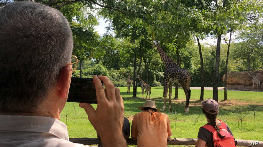 U.S. Air Force Col. Mark Henderson of Mississippi takes video of giraffes at the Nashville Zoo during early stages of the eclipse in Nashville, Tenn., Aug. 21, 2017.