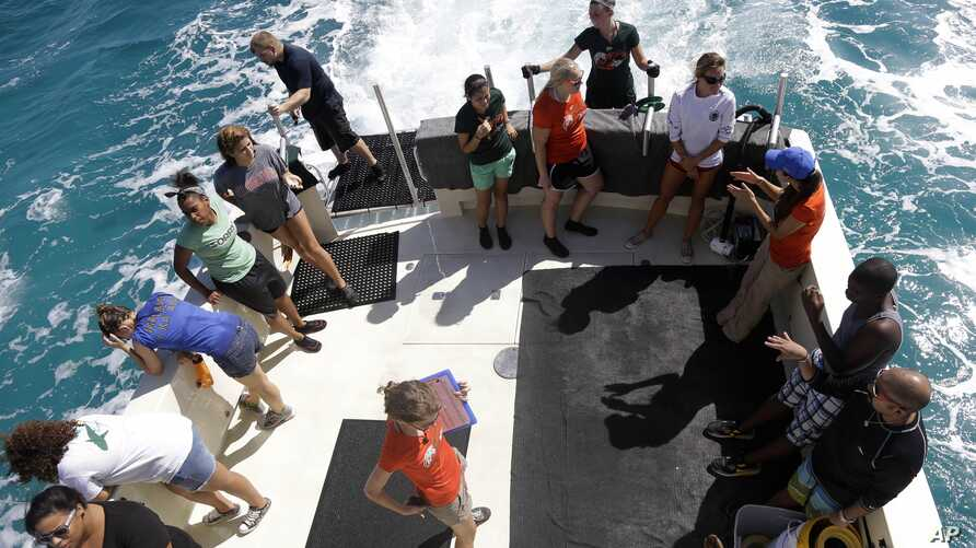 A group of University of Miami students and first generation college-bound students in the Upward Bound program joined researchers in a shark tagging mission in the Florida Keys.