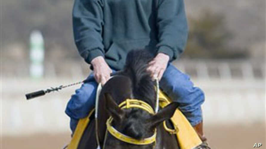 Jockey Roy Brooks goes for a morning trot on one of the race horses he rode for his return to the race track at Remington Park in Oklahoma City