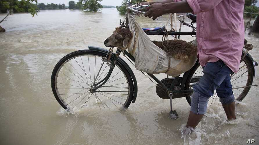 A man transports a sheep on a bicycle through a flooded road in Murkata village, east of Gauhati, north eastern Assam state, India, Aug. 14, 2017. Heavy monsoon rains have unleashed landslides and floods that killed dozens of people in recent days an